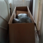 Steph West's oversized cardboard box blocking her corridor