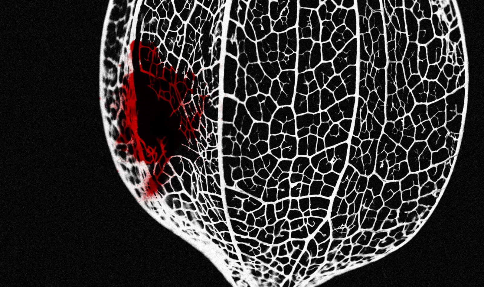 The Nature of Why show image, showing a textured almost heart like shape, with a patch of red that could be thought to be blood.